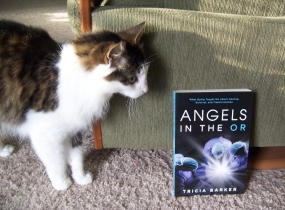 angels cat