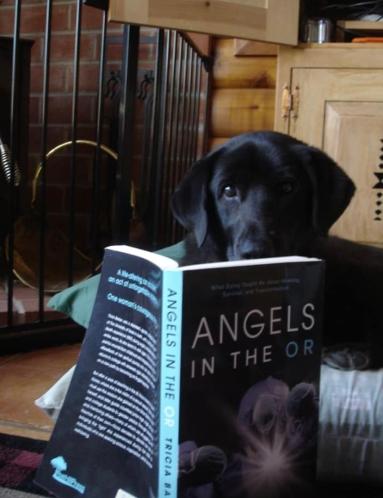 angelsdogpic